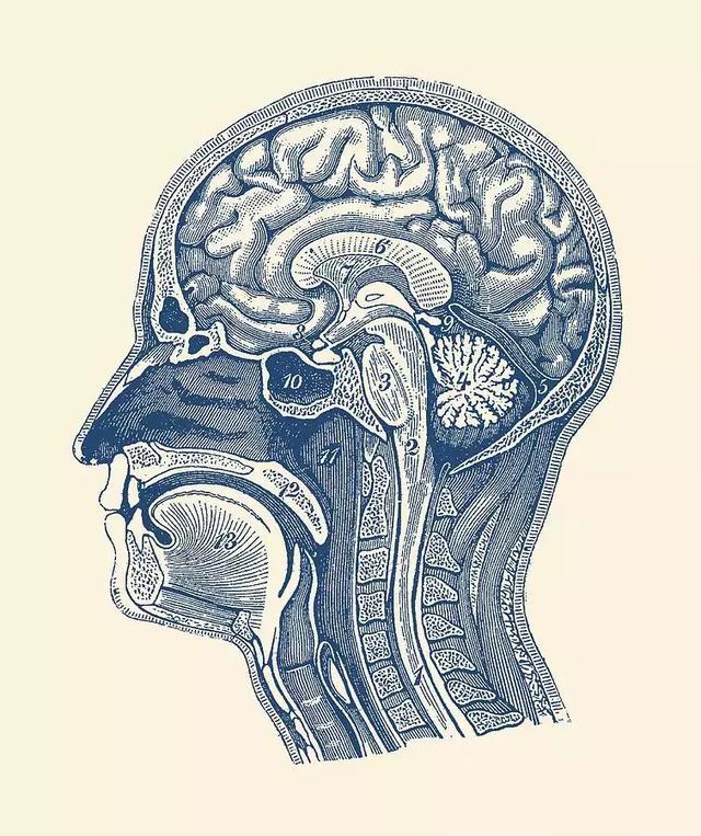 失眠真的会死人!18个月不闭眼,精神失常,大脑坏死……