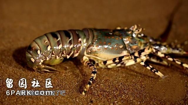 李菲儿一顿吃7个大闸蟹,却硬要放生李诞买的龙虾