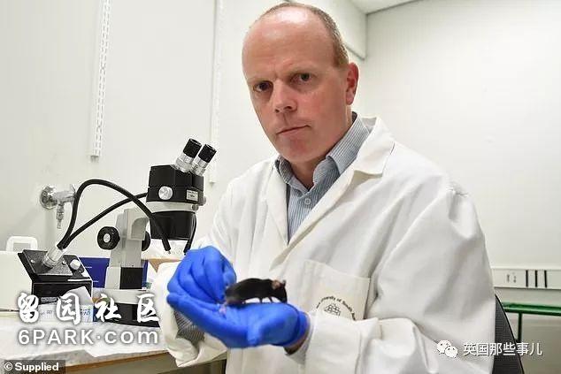 只吃不胖的神奇药片,科学家们已经在老鼠身上做出来了!