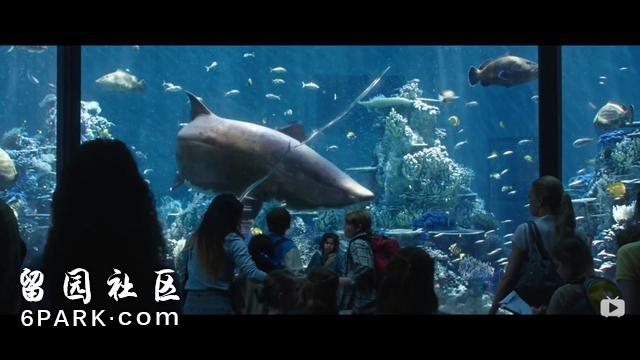 《海王》里的神奇动物:沧龙当坐骑,锥齿鲨护法